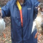 鴨猟で狩猟したマガモのオスとメス