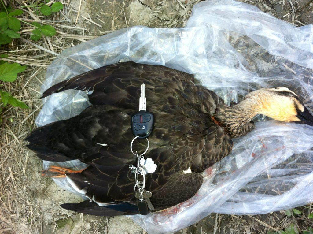 狩猟でとった鴨