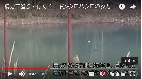 鴨猟キンクロハジロ