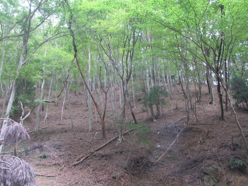 森林のシカによる食害